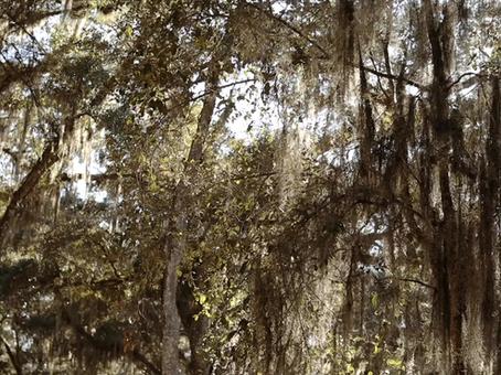 Jessika + Colin | Chandler Oaks Barn | Wedding Teaser Film | St. Augustine, FL