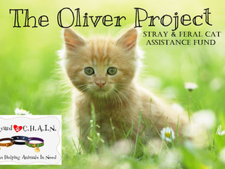 The Oliver Project Needs Your Help