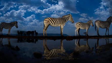 ยามค่ำคืนของบรรดาสัตว์ป่าในธรรมชาติ@South Africa