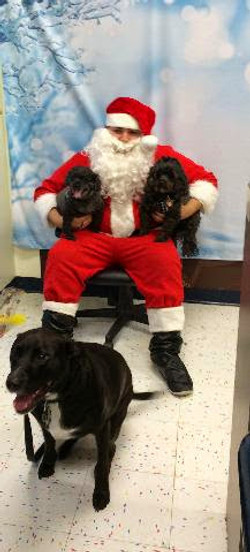 Dogs posing with Santa