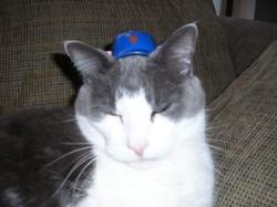 Mishka sporting Mr. Potato Head Hat