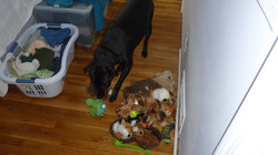 Shadow checking out the toys