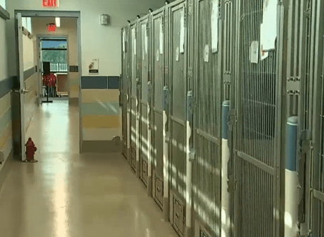 Audit: Substandard Broward animal shelter created unsafe conditions for dogs, cats and public