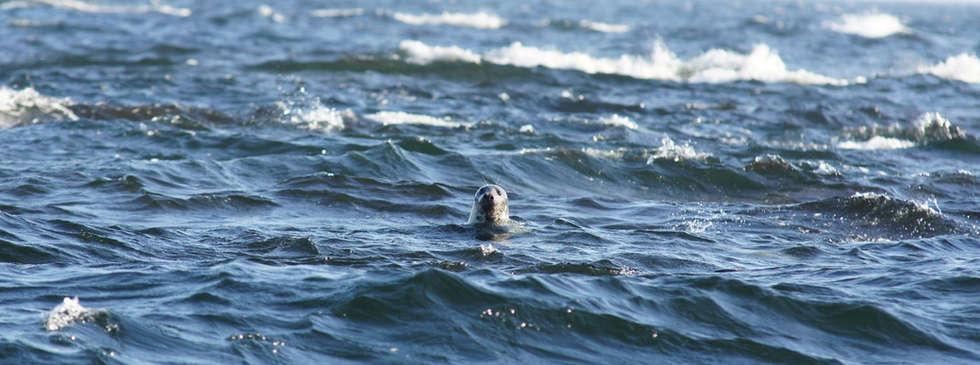 Seal safari