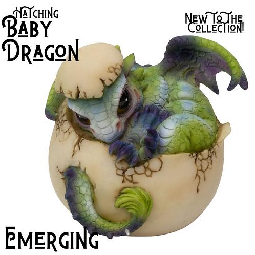 Hatching Baby Dragons!