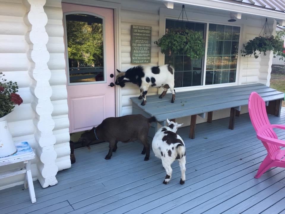 Yep, those are goats