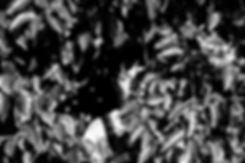 DSC06205.jpg