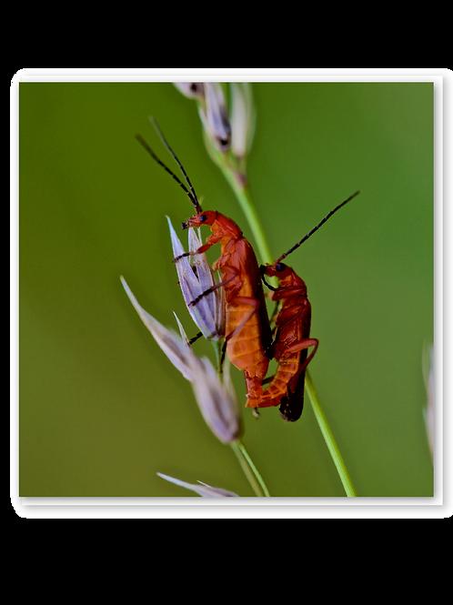 More bonking bugs