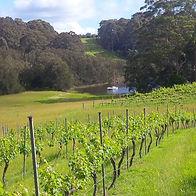 vines at TW.jpeg