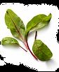 salad leaves.png