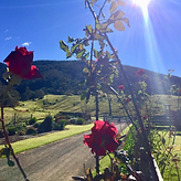 Mountain View Farm Roses.png