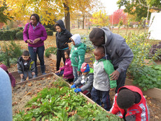 Charting programming and outcomes with Randall's Island Park Alliance