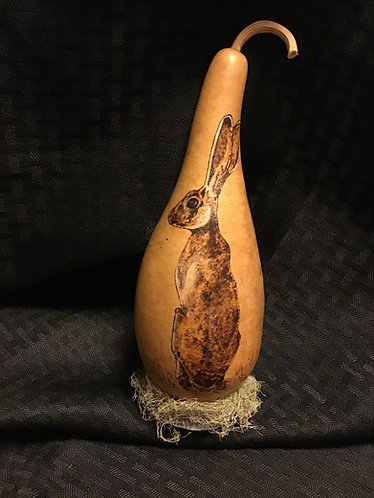 Wary Jackrabbit