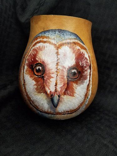 Barn Owl Up Close