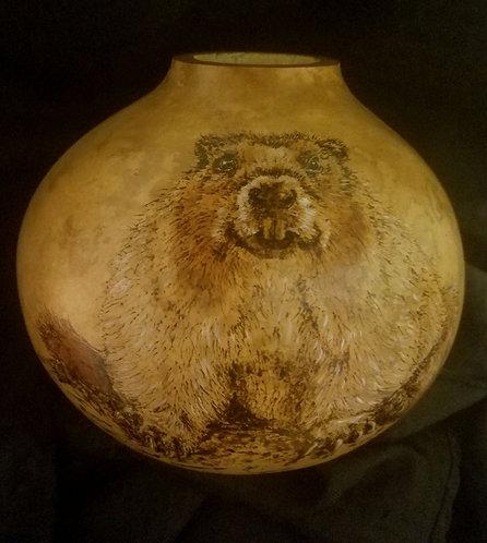 Chubby Marmot