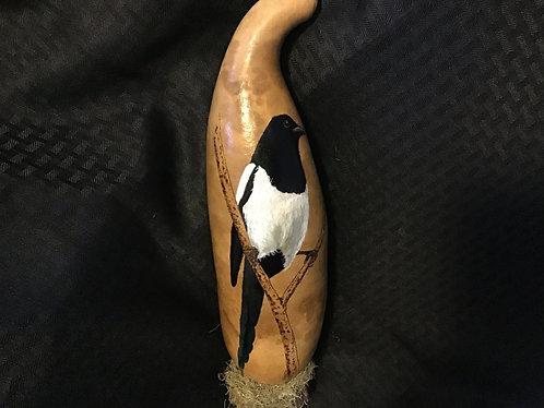 Blackbilled Magpie