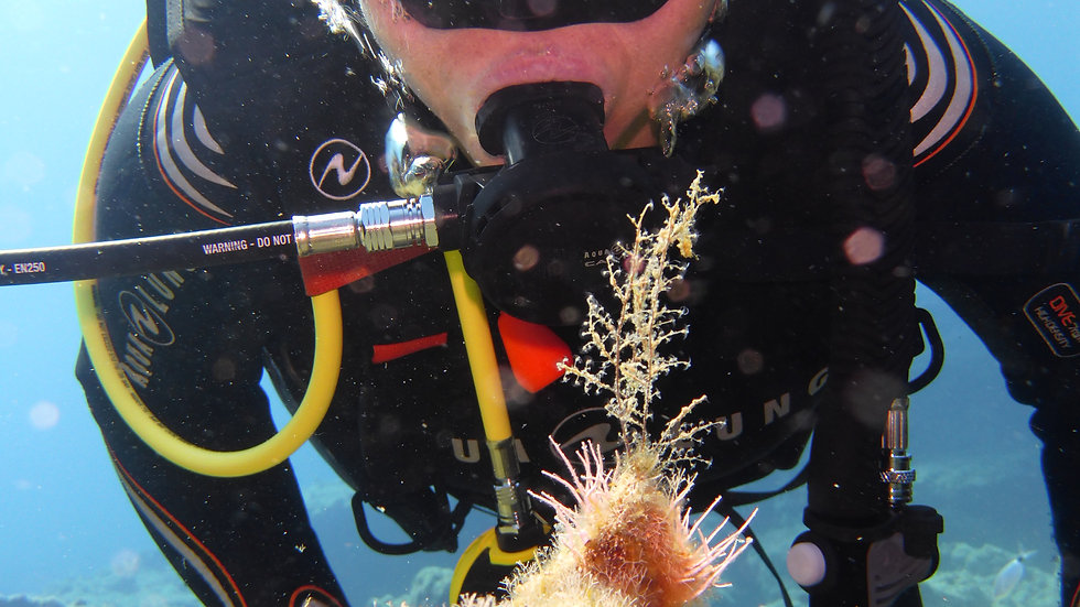 6 fun dives