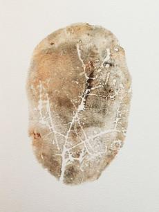 Seed Fossil VII
