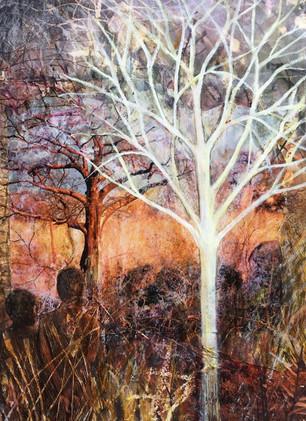 Fever Tree Magic