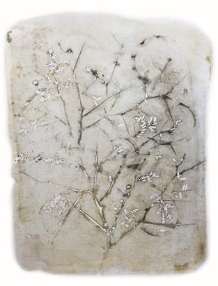 Acacia Imprint
