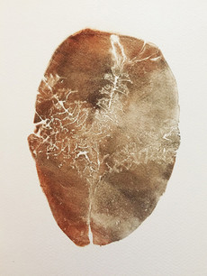 Seed Fossil XV
