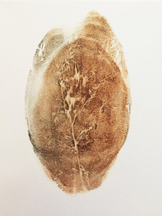 Seed Fossil I