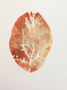 Seed Fossil VI