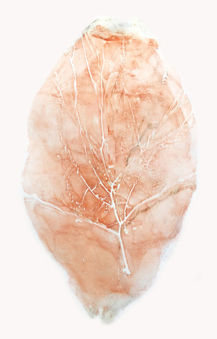 Rose Quartz Acacia Fossil