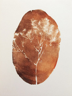 Seed Fossil XVI