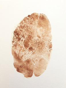 Seed Fossil XIV