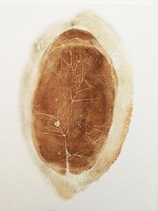 Seed Fossil VIII