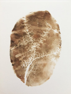 Seed Fossil X