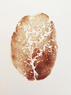 Seed Fossil XI
