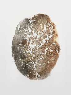 Seed Fossil V