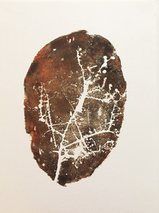 Seed Fossil III