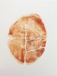 Seed Fossil IX