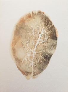 Seed Fossil XII