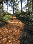 still-meadow-trail.jpg