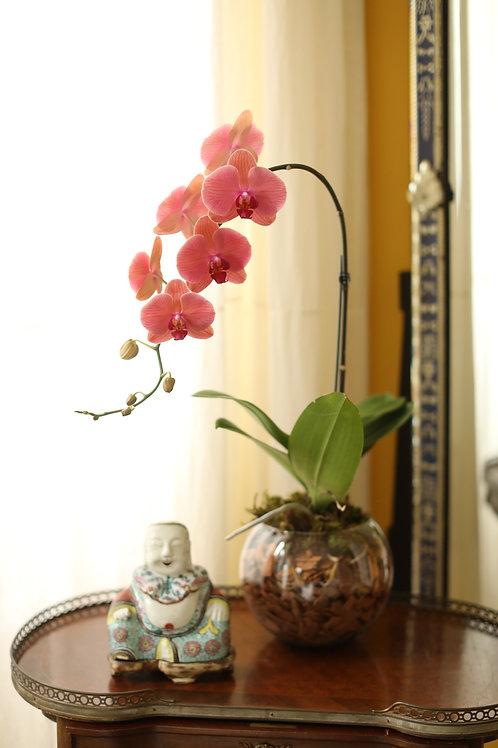 Orquidea em bowl aquário