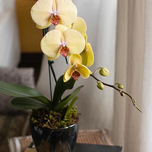 Orquídea em cachepô de cerâmica