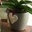Thumbnail: Orquídea em cachepô de cerâmica