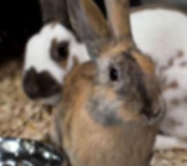 2003-Bunnies-Foto-Startseite-small.jpg