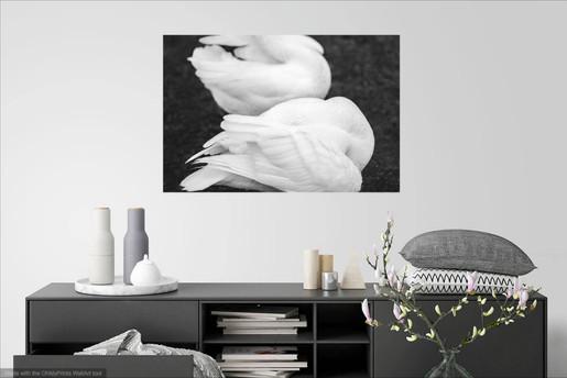 Swan Feathers Metal Print