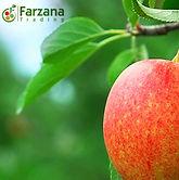 Farzana Trading Se