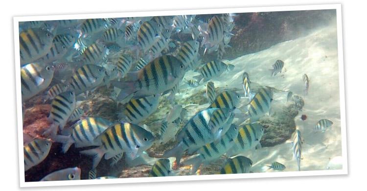 Ilha-das-Couves-04