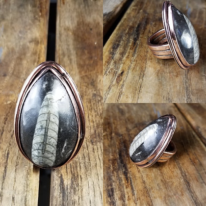 Orthoceras Fossil Ring Size 12