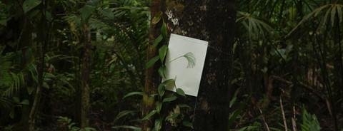 Aquarelas florestais #1