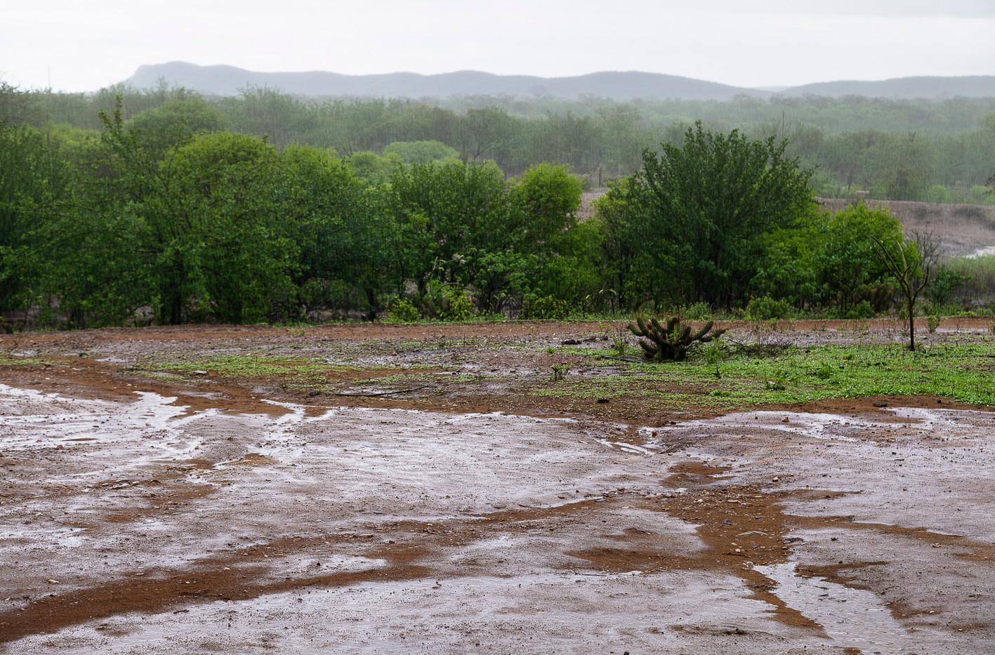 Um jardim em Floresta, paisagem do sertão #4