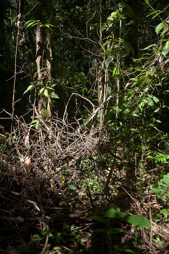 Redes para aranhas, folhas e afins #2