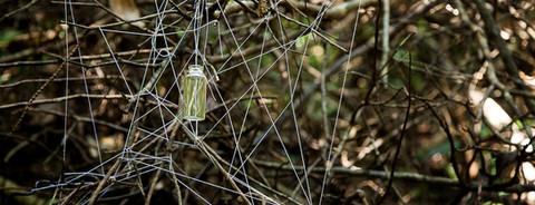 Redes para aranhas, folhas e afins #5